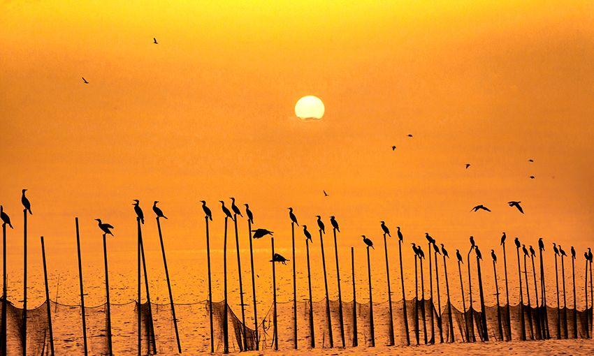 鱼鹰站围杆,列队送夕阳,亚洲最大人工平原湖上出现如此绝美画面